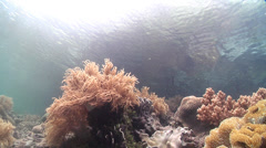 Ocean scenery backward swimover, into pan, then tilt to reveal mangrove canopy Stock Footage