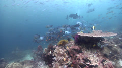Ocean scenery female diver, on deep coral reef, HD, UP24264 Stock Footage