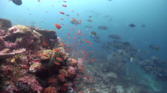 Ocean scenery of diverse fishlife on a deep coral reef. Stock Footage