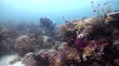 Male model scuba diver on deep coral reef with Scalefin anthias in Indonesia, Stock Footage