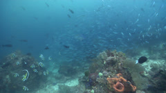 Ocean scenery fusiliers, schooling bannerfish, on deep coral reef, HD, UP24268 Stock Footage