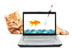 Kultakala, kissa, kannettava tietokone Kuvituskuvat