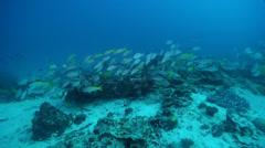 Ocean scenery on deep coral reef, HD, UP24501 Stock Footage