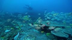 Ocean scenery on deep coral reef, HD, UP24517 Stock Footage