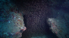 Ocean scenery enters cavern, loads of cardinalfish swarming around, distant Stock Footage