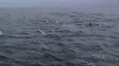 Pacific White-sided Dolphins Stock Footage