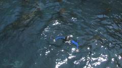 Ocean squba Diver Stock Footage