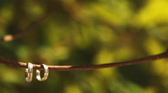 Wedding rings on a tree Stock Footage