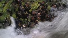 Tidepool waves Stock Footage
