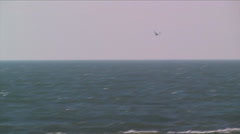 Least Tern flying over the pacific ocean at Channel Islands National Park Stock Footage