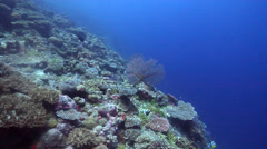 Ocean scenery fans on a wall, distant divers, great visibility, grainy, on coral Stock Footage