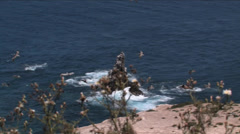 California Brown Pelicans flying just off shore of Santa Rosa Island  Stock Footage