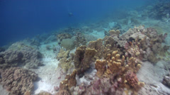 Ocean scenery fast and turbulent drift, on shallow coral reef, HD, UP25710 Stock Footage