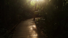 Sun light in jungle footpath Stock Footage