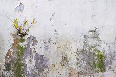 Corroded Wall - stock photo