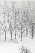Heavy snowfalling Stock Photos
