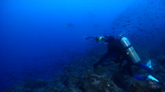 Videographer hovering on rocky reef with Pacific creole-fish Spotted eagle ray Stock Footage