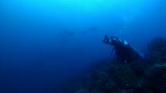 Group of scuba divers hovering on rocky reef with Spotted eagle ray in Galapagos Stock Footage