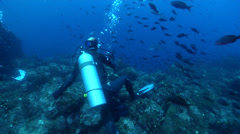 Group of scuba divers swimming on rocky reef with Pacific creole-fish Spotted Stock Footage
