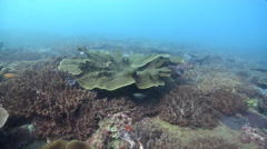 Ocean scenery inshore reef, surge moves camera around coral, on rocky reef, HD, Stock Footage