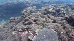 Ocean scenery hard and soft corals, surge, on rocky reef, HD, UP26624 Stock Footage