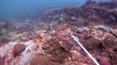 Ocean scenery surge, transect tape measure, research, monitoring, on rocky reef, Stock Footage