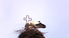 A couple of storks composing the nest near the crucifix Stock Footage