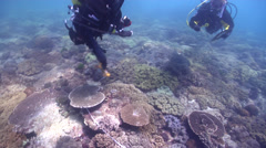 Scientific diver on shallow coral reef in Australia, HD, UP26669 Stock Footage