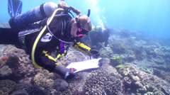Scientific diver swimming on rocky reef in Australia, HD, UP26671 - stock footage