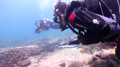 Scientific diver swimming on shallow coral reef in Australia, HD, UP26673 Stock Footage