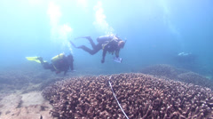 Scientific diver swimming on shallow coral reef in Australia, HD, UP26674 Stock Footage
