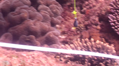 Scientific diver on shallow coral reef in Australia, HD, UP26682 Stock Footage