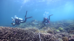 Scientific diver swimming on shallow coral reef in Australia, HD, UP26700 Stock Footage