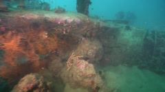 Ocean scenery WWII, World War 2 plane wreck, male diver in shorts, on silty - stock footage