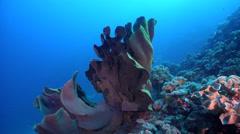 Ocean scenery on deep coral reef, HD, UP27466 Stock Footage