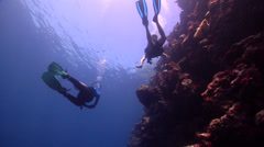Buddy team of scuba divers swimming on wall in Solomon Islands, HD, UP27984 Stock Footage