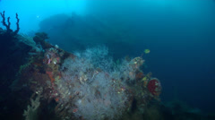 Ocean scenery WWII, World War 2 Japanese freighter, on wreckage, HD, UP27997 Stock Footage