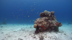 Ocean scenery dark, overcast, gloomy, plankton feeders out away from protection Stock Footage