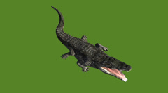 Crocodile open mouth attack hunting eating,Dangerous animals. Stock Footage