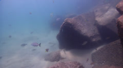 Ocean scenery on river mouth rock wall, HD, UP31528 Stock Footage