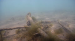 Stock Video Footage of Ocean scenery lots of directional changes, on silty river bed, HD, UP31565