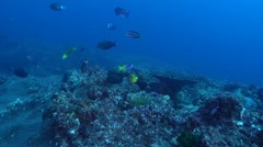 Ocean scenery on rocky reef, HD, UP31632 Stock Footage