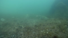 Ocean scenery camera settles into weed to hide from turtle, on river mouth rock Stock Footage