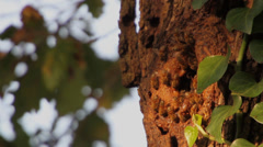 API 3, Bees create nests on tree trunk at sunset Stock Footage