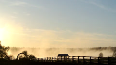 Sunrise. Fog over the river - stock footage