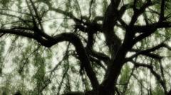 Tumma Mystic Willow Tree Sleeping Joker - 29,97FPS NTSC Arkistovideo