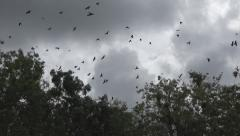 Flock of Crows Flying on Cloudy, Scary Sky, Ravens in Flight, Birds in Air - stock footage