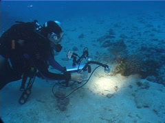 Videographer taking images on sand and coral rubble with Dotted sweetlips in Stock Footage