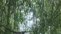 Flashing Radiating Sunlight Pond Tree Branches - 29,97FPS NTSC Stock Footage