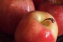 Bright Red Variegated Apples Stock Photos